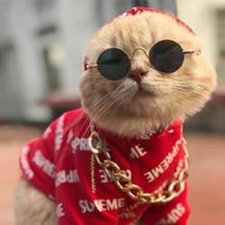 Đồ Chơi , Thời Trang Cho Mèo