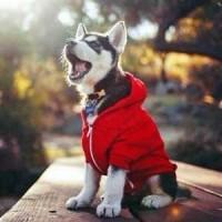 Thời Trang Và Phụ Kiện Thời Trang Cho Chó